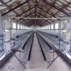 Chicken steel farm building